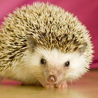 calvinhedgehog photo